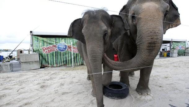 Ultimo show con elefanti a circo Barnum