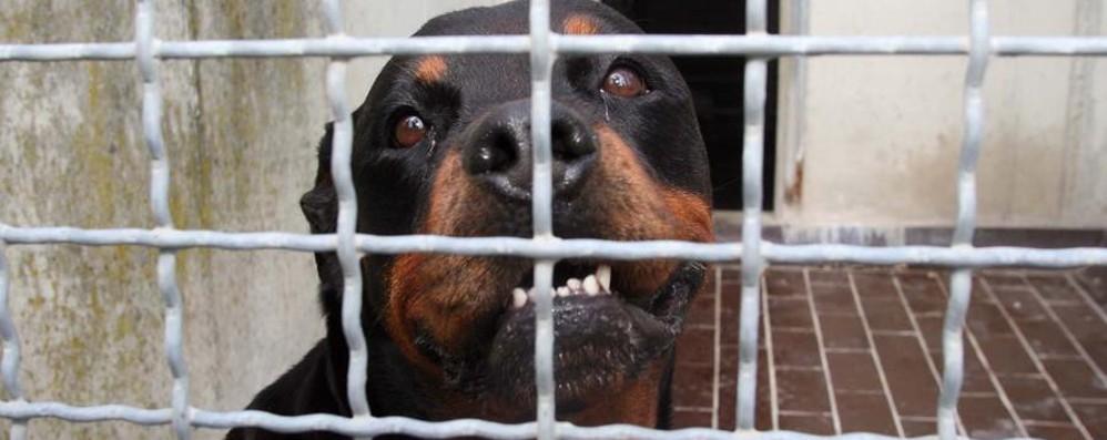 «Troppi cani pericolosi in giro senza guinzaglio e museruola»