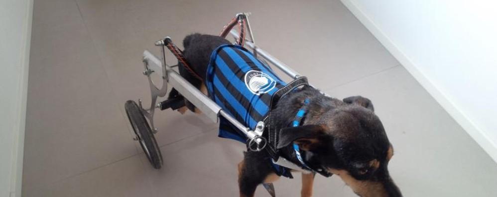 Dalla Sicilia a Ponteranica Storia di Max, un cane speciale