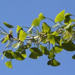 Una domenica davvero verde? A Colognola si pianta un bosco...