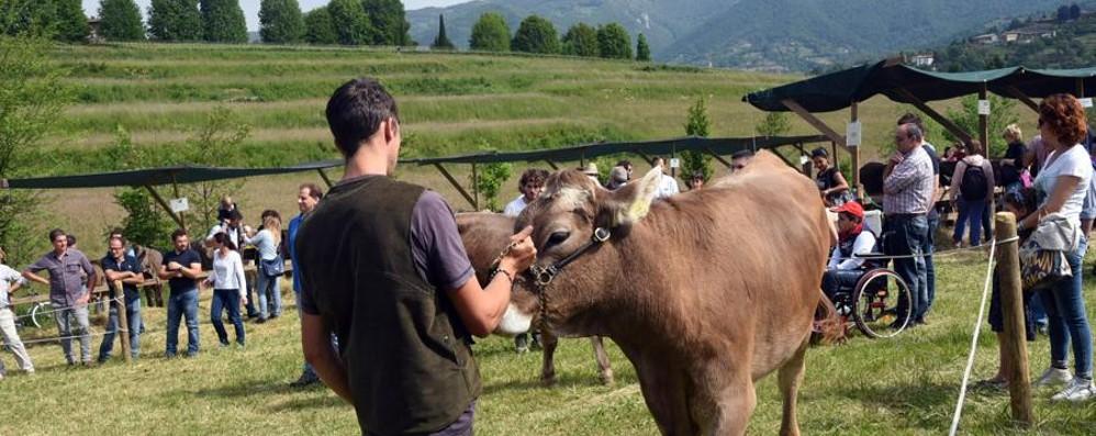 Fiera in  Valmarina: tutto esaurito Prodotti a km 0 e novità per l'estate