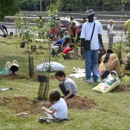 La «Marcia degli alberi» di Legambiente regala un nuovo bosco a Colognola