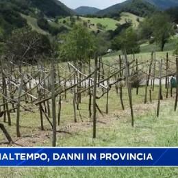 Valle Cavallina e Basso sebino, vigneti distrutti dalla grandine