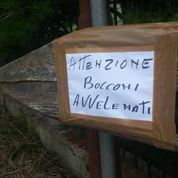 Bocconi avvelenati a Torre Boldone Due cani intossicati, lanciata l'allerta