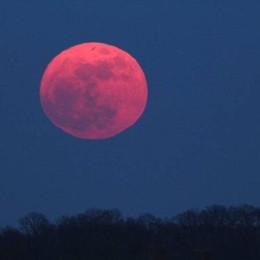 Tutti con il naso all'insù, c'è la luna rosa Incanta il solstizio d'estate - foto e video
