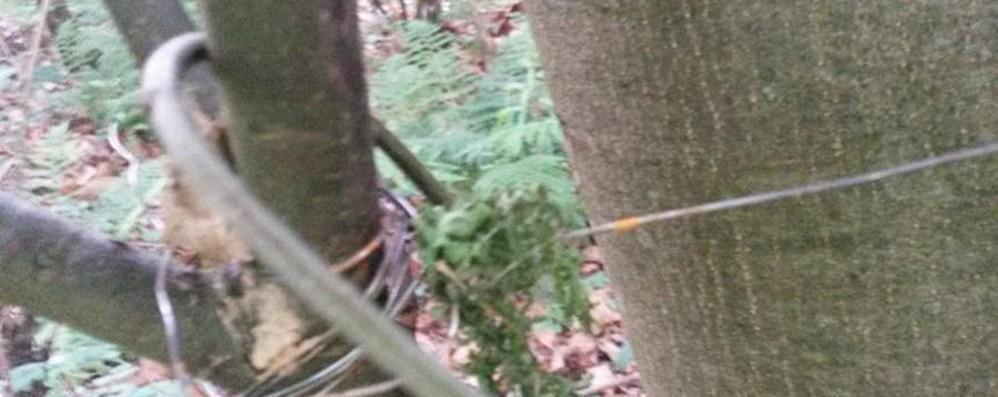 Cavi trappola nei boschi della Val Seriana L'allarme in Fb: sono ad altezza collo