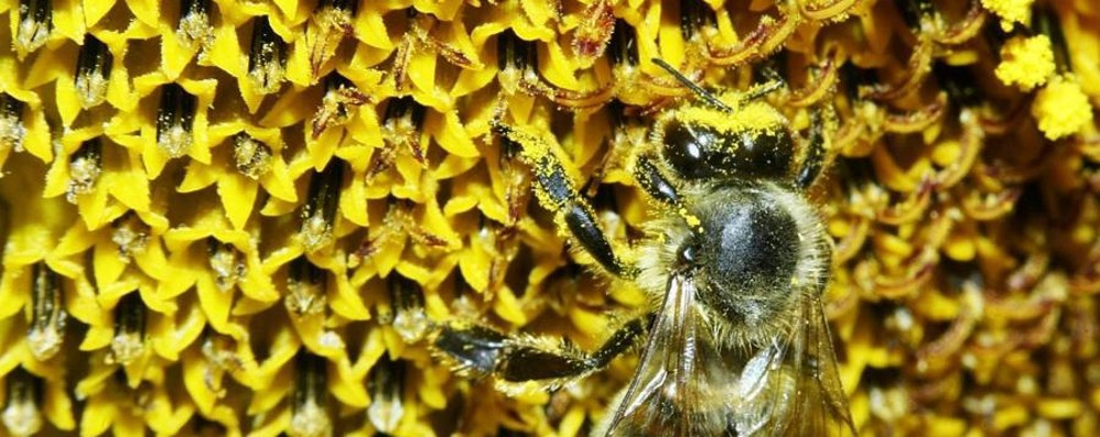 Il meteo rovina la produzione di miele Fiori d'acacia compromessi dalla pioggia