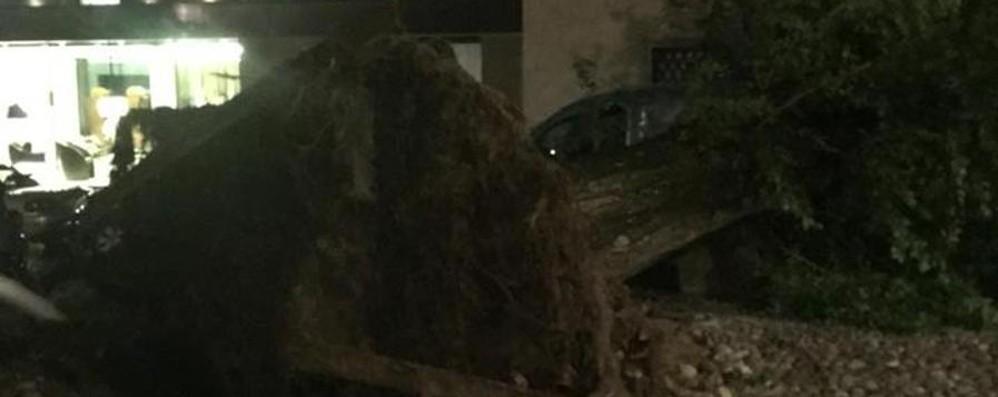 Forti raffiche di vento in città e provincia Alberi caduti, auto e case danneggiate