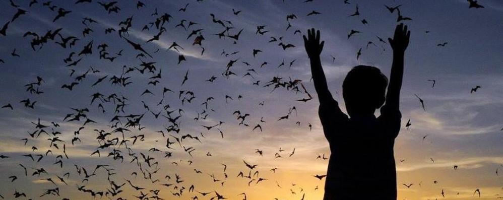Una notte con i pipistrelli all'Oasi Wwf di Valpredina