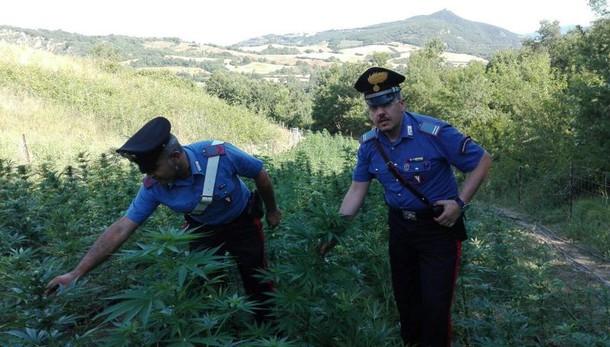 Legge cannabis arriva in Aula Camera
