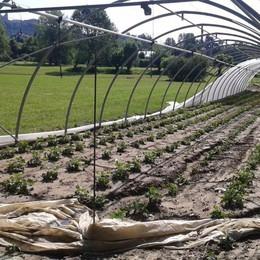 Camera di Commercio, dividendi Sacbo agli agricoltori colpiti dai nubifragi