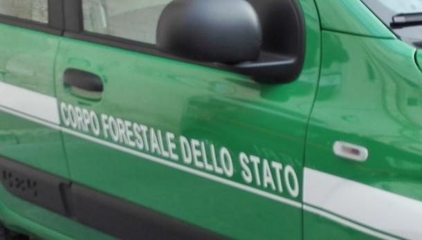 Renzi, Forestale con i Carabinieri