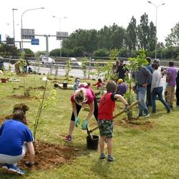 A Bergamo 725 nuovi alberi entro l'anno «Saranno piante antismog» - Il video