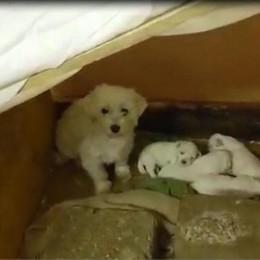 Cani di razza in box abusivi Blitz a Zanica, due denunce