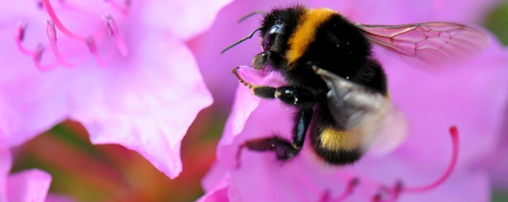 Punture di api e calabroni Una campagna per difendersi