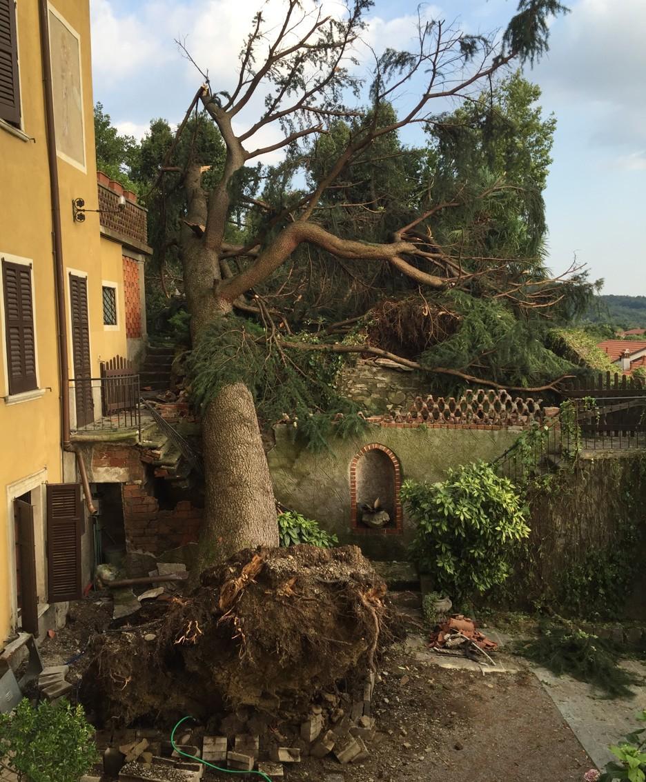 Una grossa pianta caduta a Villa d'Adda
