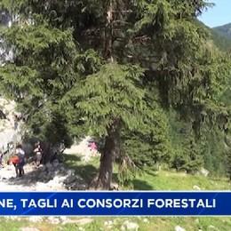 Regione, tagli ai consorzi forestali