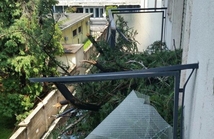 Il terrazzo di una casa in via XXIV Maggio 2G, a Bergamo, «trafitto» da un abete