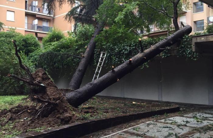 Caduti due grossi pini in un condominio a Colognola