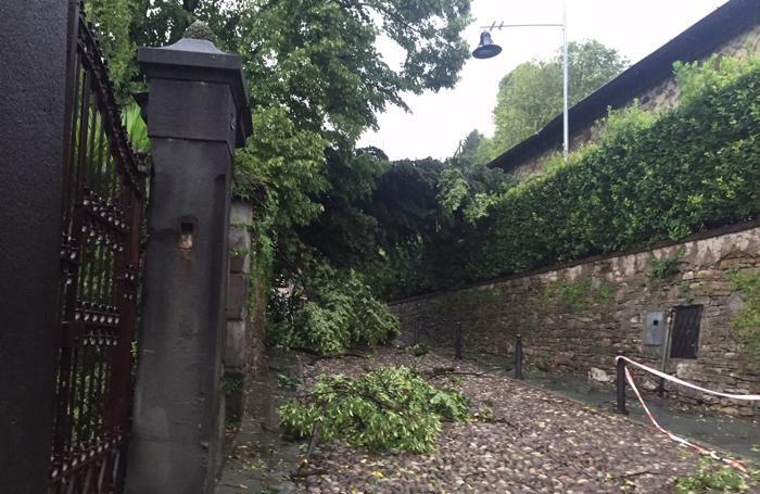 Albero abbattuto in via Sudornoe strada chiusa