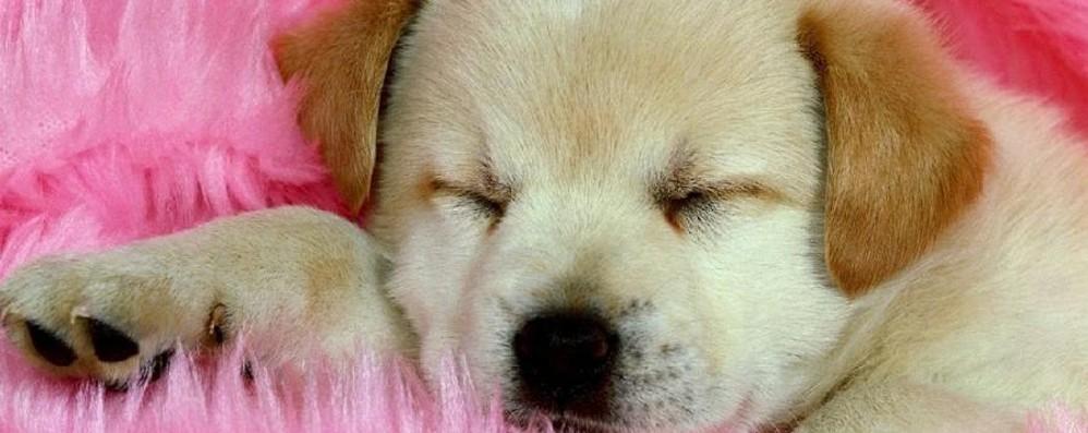 La scelta del cucciolo è difficile? Ecco come evitare spiacevoli sorprese