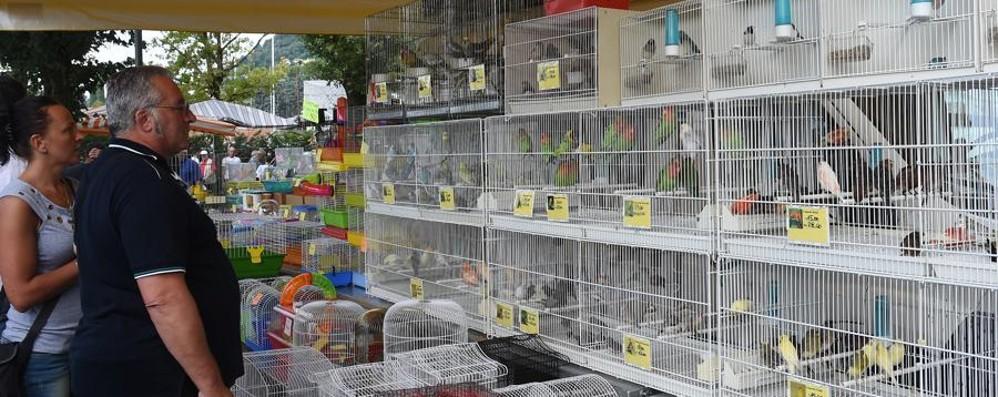Sarnico, in 3.500 alla Fiera degli uccelli e va in scena anche la protesta animalista