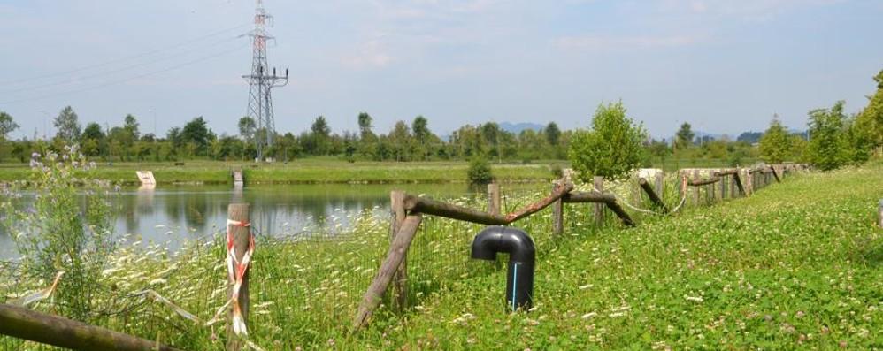 al parco della trucca alghe nei laghetti e le staccionate