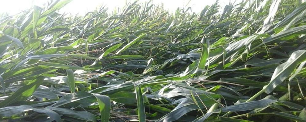 Salgono a 5 milioni i danni all'agricoltura  Bergamo: colpite stalle, serre e capannoni