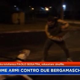 Dogo argentini. L'esperto: Per gestirli serve la stessa cautela necessaria per le armi