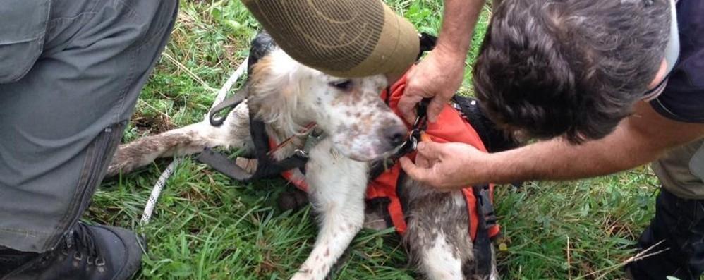 Cade per 25 metri in un pozzo - foto Colli di San Fermo, salvato il cane Macio