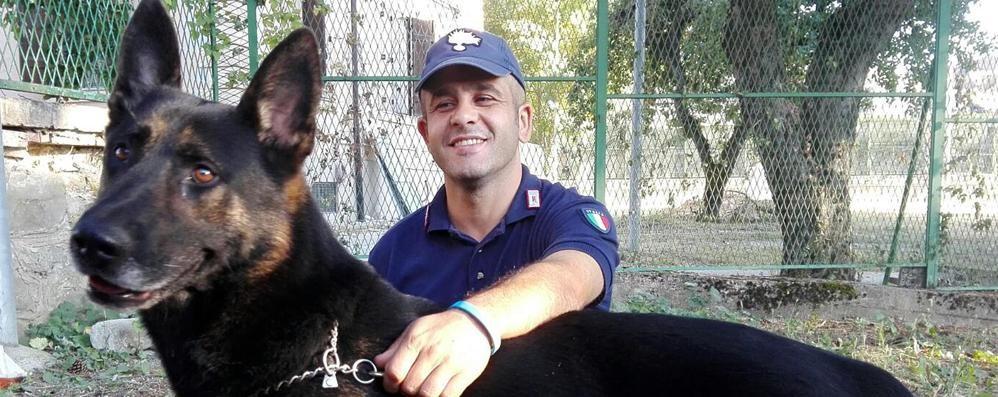 Protagonisti i «cani da macerie» hanno salvato la vita a 60 persone