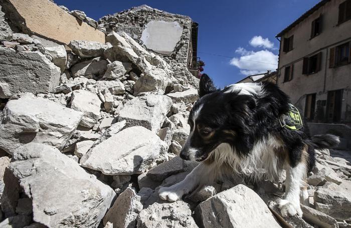 Vigili del Fuoco a lavoro tra le macerie ad Arquata, il giorno dopo il terremoto