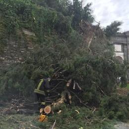 Rami sui binari, ripresa la circolazione Crolla un albero in Porta S. Agostino