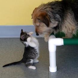 Cane e gatto possono convivere?