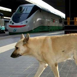 Cani grandi in treno? Si paga solo 5 euro Boom di ticket con l'idea anti abbandoni