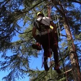 Arrampicate sugli alberi, che passione A Pedrengo arriva la sfida italiana - Video