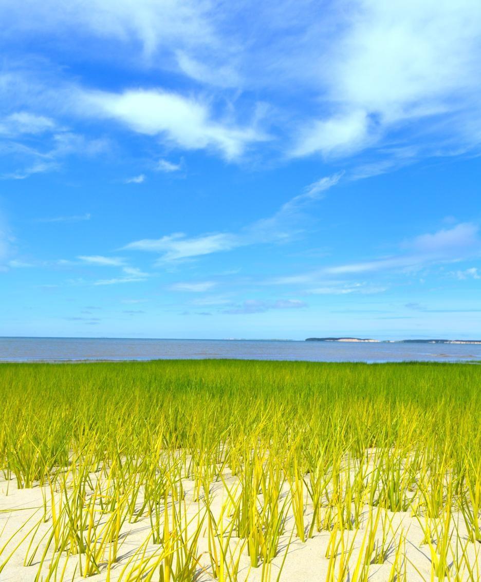 I Padri Pellegrini attraccano sulla punta della penisola di Cape Cod l'11 Novembre 1620, ma decidono di cercare un altro luogo per insediarsi: il freddo e la forza dei venti erano troppo intensi.
