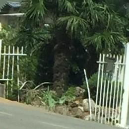 Auto sfonda recinzione e si ribalta Paura per due giovani a Vigano