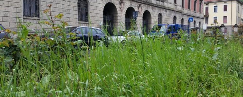 Bergamo, l'erba è troppo alta? Sul Web scopri il prossimo taglio