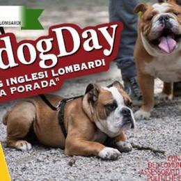 Tutti pazzi per i bulldog Il 16 ottobre alla Trucca