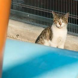 «Killer» dei gatti in azione a Gandosso L'Aidaa offre ricompensa per scovarlo