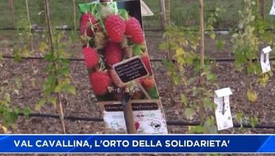 Val Cavallina, una festa per l'orto solidale