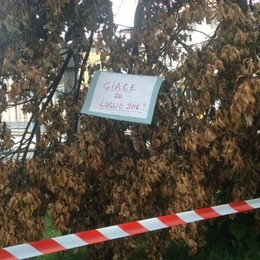 L'albero che «giace» lì da luglio Quando la satira non fa male a nessuno