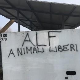 Raid animalista a Misano Liberati 600 visoni da un allevamento