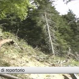 Foresto - Muore mentre pota un albero: terza vittima del bosco in meno di due mesi