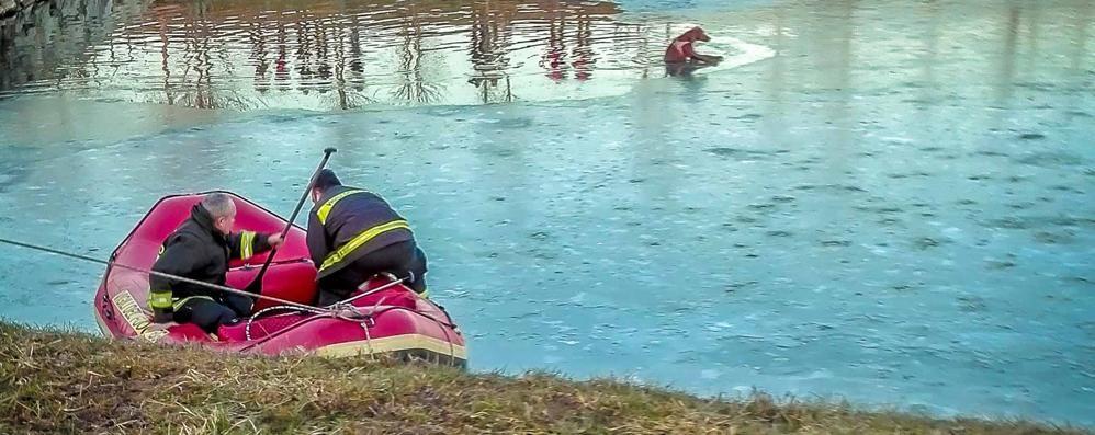 Cane cade nel laghetto ghiacciato -Video Salvato in extremis dai pompieri