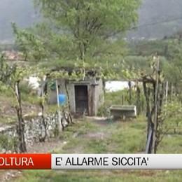 Coldiretti: non piove dall'inizio dell'anno: è siccità