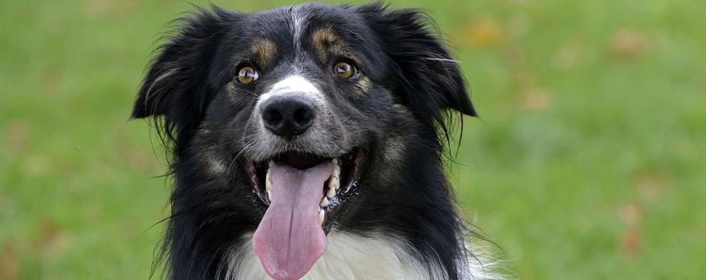 Perché i cani ci saltano addosso?  E soprattutto come evitarlo?