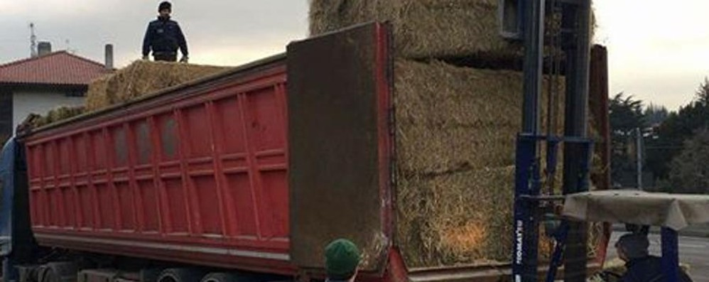 Venti tonnellate di fieno per Amatrice  Gara di solidarietà nella Bergamasca