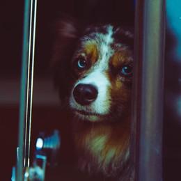 Cagnolino trascinato dall'auto a Strozza  Il padrone: una distrazione, sto  male